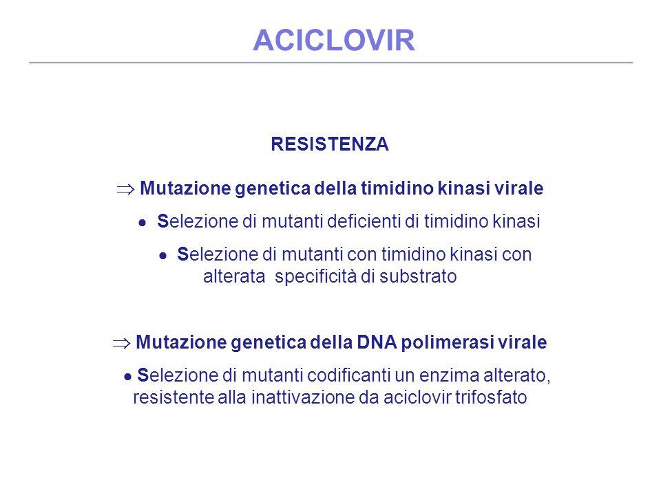 RESISTENZA  Mutazione genetica della timidino kinasi virale  Selezione di mutanti deficienti di timidino kinasi  Selezione di mutanti con timidino kinasi con alterata specificità di substrato  Mutazione genetica della DNA polimerasi virale  Selezione di mutanti codificanti un enzima alterato, resistente alla inattivazione da aciclovir trifosfato ACICLOVIR
