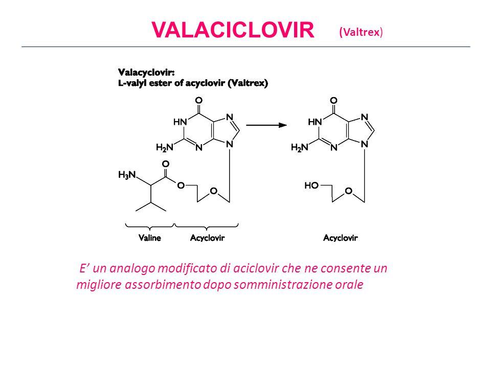 E' un analogo modificato di aciclovir che ne consente un migliore assorbimento dopo somministrazione orale VALACICLOVIR (Valtrex)