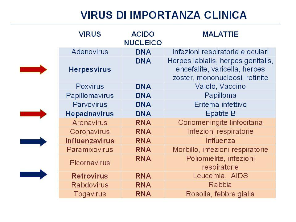 FARMACI ATTIVI CONTRO GLI HERPES VIRUS