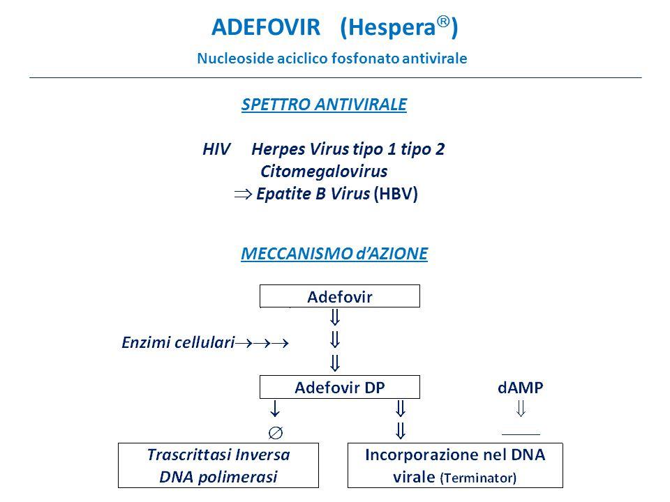 ADEFOVIR (Hespera  ) Nucleoside aciclico fosfonato antivirale SPETTRO ANTIVIRALE HIV Herpes Virus tipo 1 tipo 2 Citomegalovirus  Epatite B Virus (HBV) MECCANISMO d'AZIONE