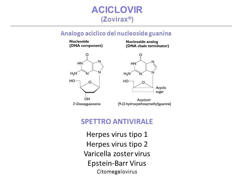 Acyclovir è un profarmaco E' converito dalla TIMIDINA CHINASI (TK) VIRALE, e successivamente dalle chinasi cellulari.