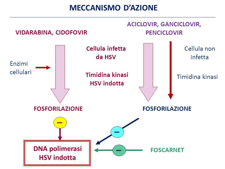 VIDARABINA, CIDOFOVIR ACICLOVIR, GANCICLOVIR, PENCICLOVIR Cellula infetta da HSV Cellula non infetta Enzimi cellulari Timidina kinasi HSV indotta Timidina kinasi FOSFORILAZIONE DNA polimerasi HSV indotta FOSCARNET _ _ _ MECCANISMO D'AZIONE