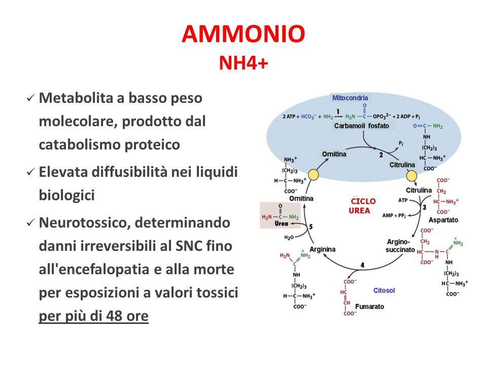 AMMONIO NH4+ Metabolita a basso peso molecolare, prodotto dal catabolismo proteico Elevata diffusibilità nei liquidi biologici Neurotossico, determina