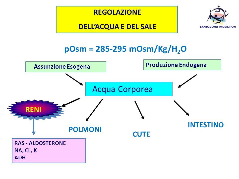 REGOLAZIONE DELL'ACQUA E DEL SALE pOsm = 285-295 mOsm/Kg/H 2 O Assunzione Esogena Produzione Endogena Acqua Corporea INTESTINO POLMONI CUTE RAS - ALDO