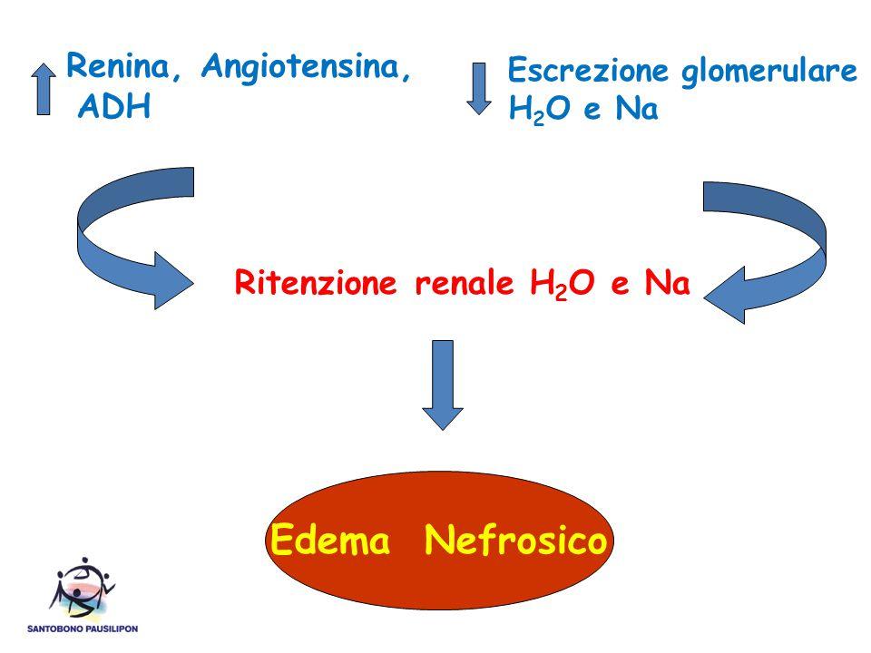 Renina, Angiotensina, ADH Escrezione glomerulare H 2 O e Na Ritenzione renale H 2 O e Na Edema Nefrosico