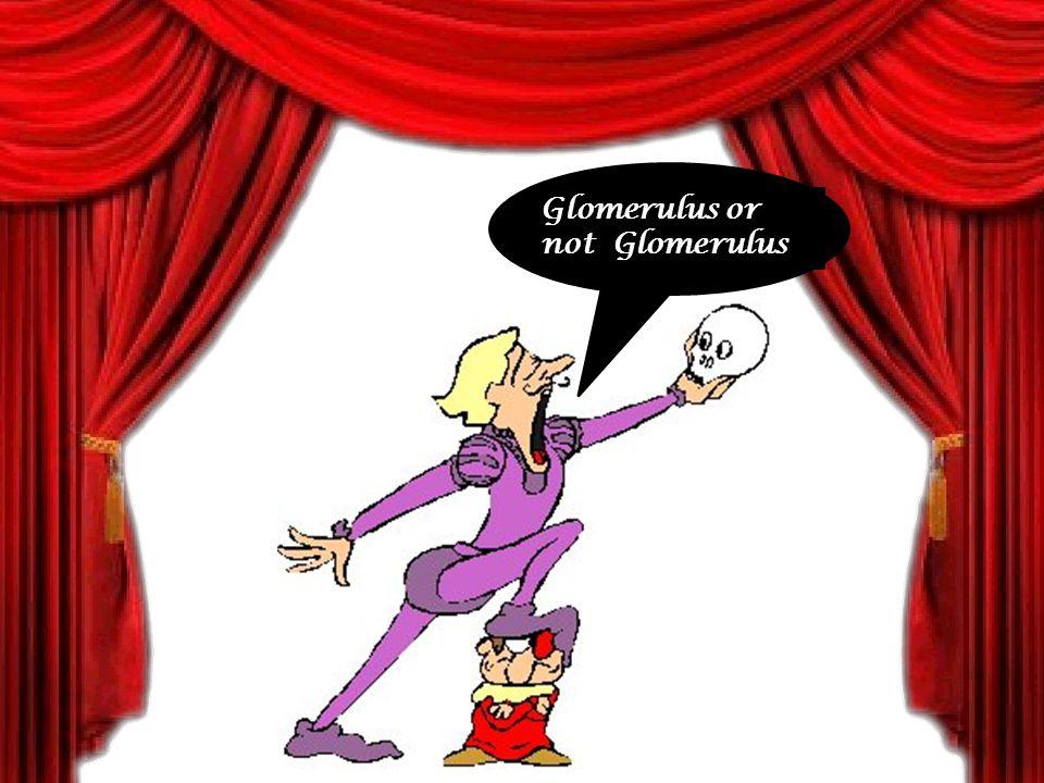 Glomerulus or not Glomerulus