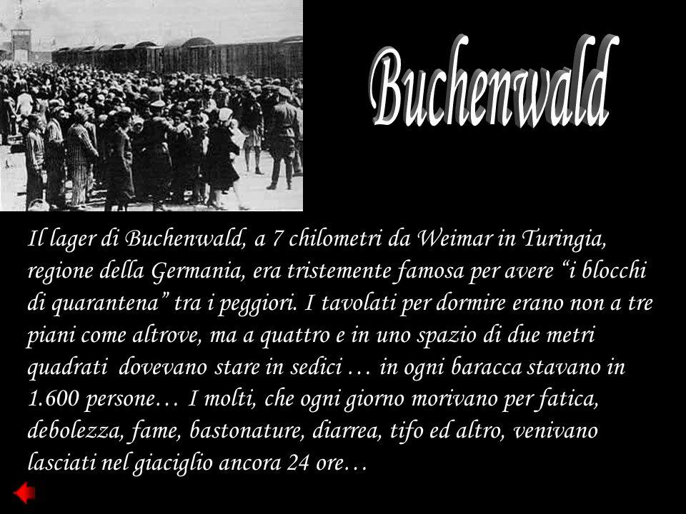 """Il lager di Buchenwald, a 7 chilometri da Weimar in Turingia, regione della Germania, era tristemente famosa per avere """"i blocchi di quarantena"""" tra i"""