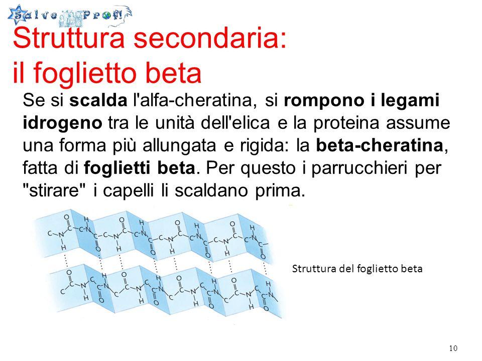 10 Struttura secondaria: il foglietto beta Se si scalda l'alfa-cheratina, si rompono i legami idrogeno tra le unità dell'elica e la proteina assume un