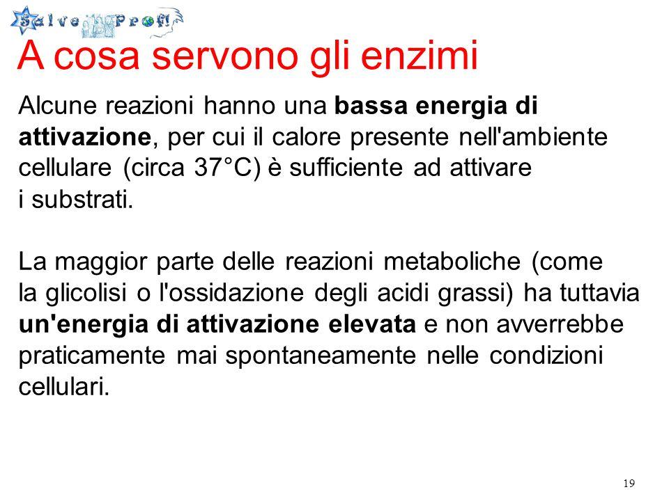 19 A cosa servono gli enzimi Alcune reazioni hanno una bassa energia di attivazione, per cui il calore presente nell'ambiente cellulare (circa 37°C) è
