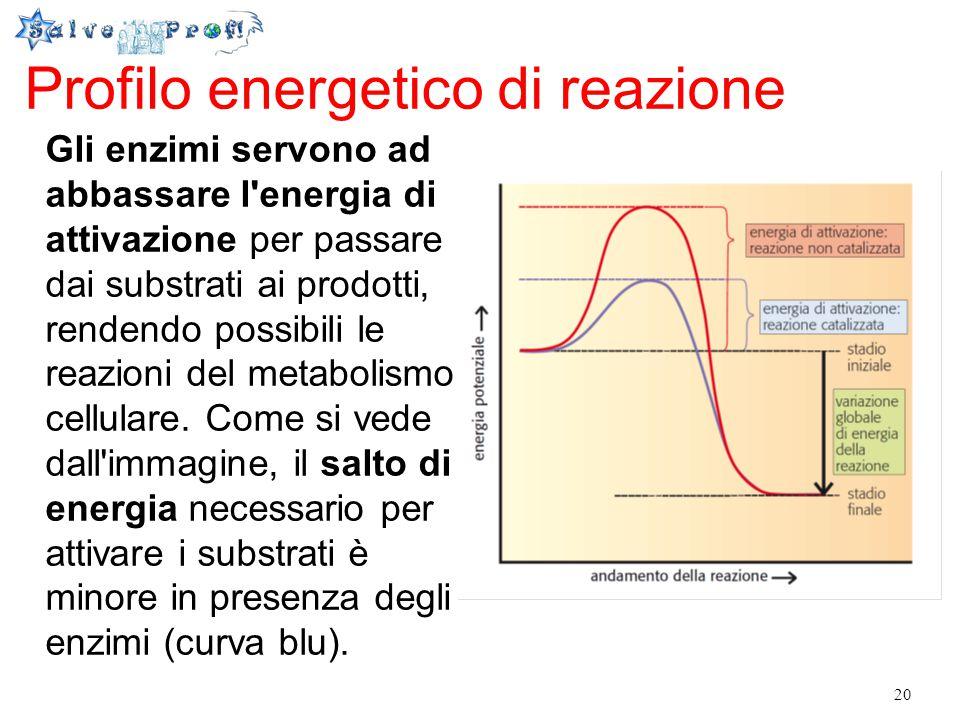 20 Profilo energetico di reazione Gli enzimi servono ad abbassare l'energia di attivazione per passare dai substrati ai prodotti, rendendo possibili l