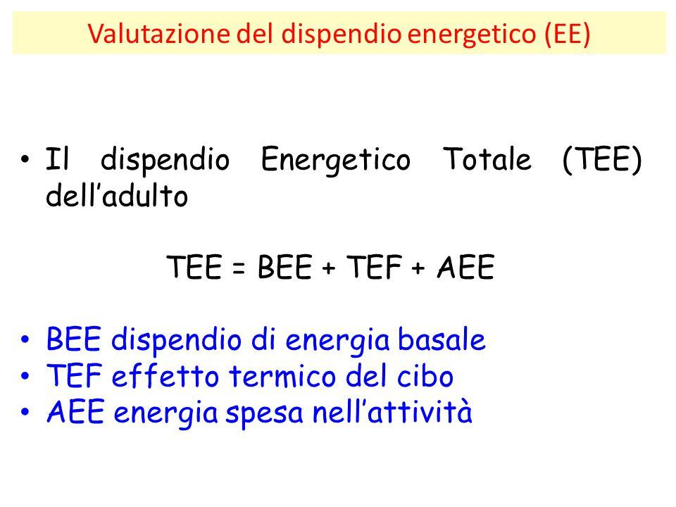 Valutazione del dispendio energetico (EE) Il dispendio Energetico Totale (TEE) dell'adulto TEE = BEE + TEF + AEE BEE dispendio di energia basale TEF e