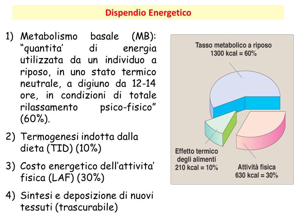 """Dispendio Energetico 1)Metabolismo basale (MB): """"quantita' di energia utilizzata da un individuo a riposo, in uno stato termico neutrale, a digiuno da"""