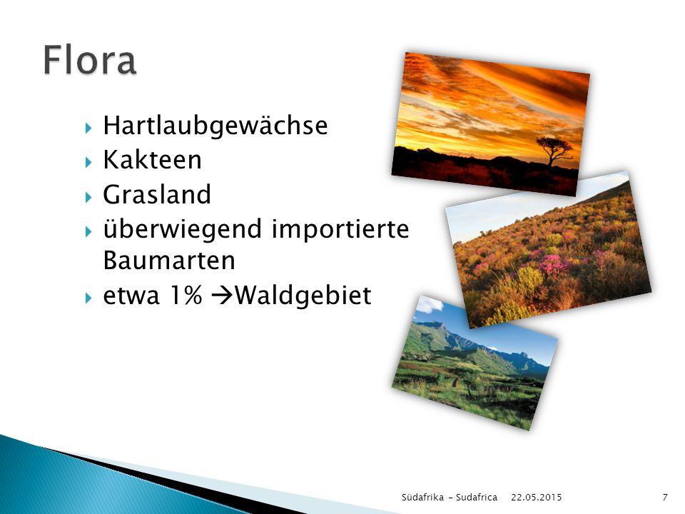  Hartlaubgewächse  Kakteen  Grasland  überwiegend importierte Baumarten  etwa 1%  Waldgebiet 22.05.2015 Südafrika - Sudafrica7