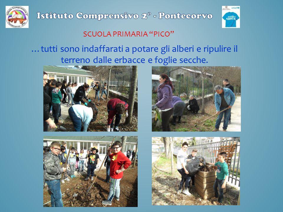 """SCUOLA PRIMARIA """"PICO"""" …tutti sono indaffarati a potare gli alberi e ripulire il terreno dalle erbacce e foglie secche."""