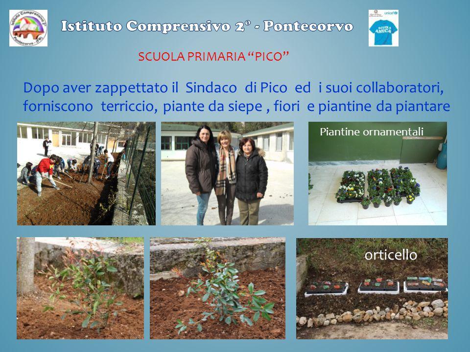 """SCUOLA PRIMARIA """"PICO"""" Dopo aver zappettato il Sindaco di Pico ed i suoi collaboratori, forniscono terriccio, piante da siepe, fiori e piantine da pia"""