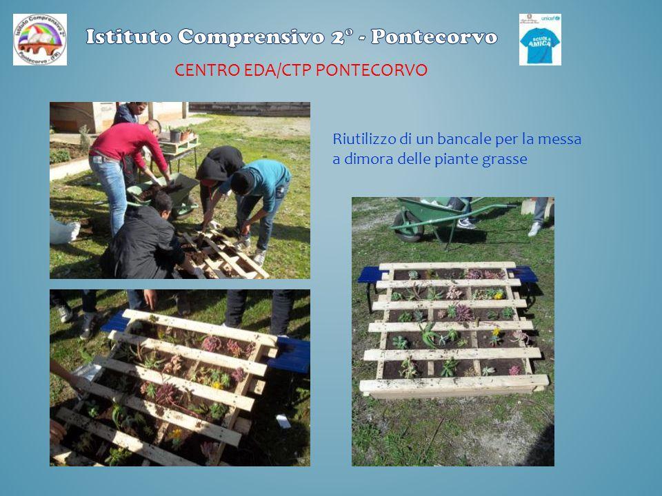 CENTRO EDA/CTP PONTECORVO Riutilizzo di un bancale per la messa a dimora delle piante grasse