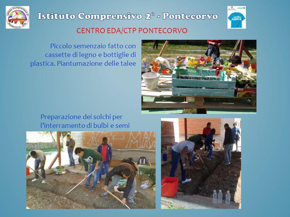 CENTRO EDA/CTP PONTECORVO Piccolo semenzaio fatto con cassette di legno e bottiglie di plastica. Piantumazione delle talee Preparazione dei solchi per