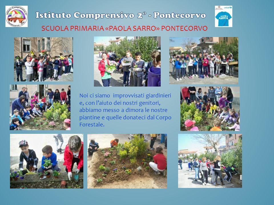 SCUOLA PRIMARIA «PAOLA SARRO» PONTECORVO Noi ci siamo improvvisati giardinieri e, con l'aiuto dei nostri genitori, abbiamo messo a dimora le nostre pi
