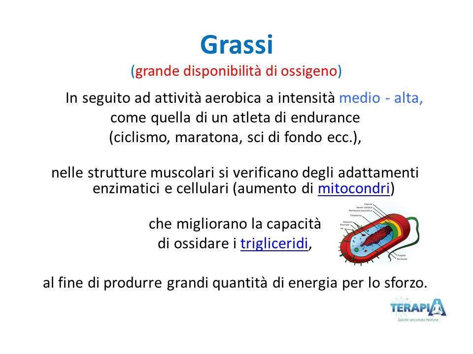 Grassi (grande disponibilità di ossigeno) In seguito ad attività aerobica a intensità medio - alta, come quella di un atleta di endurance (ciclismo, m