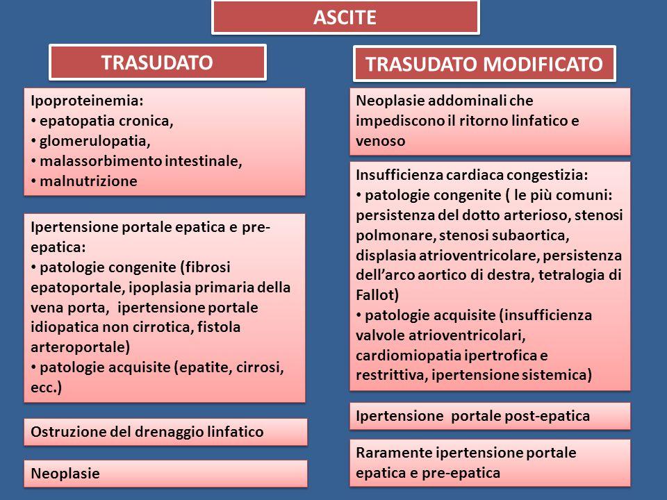 ASCITE TRASUDATO TRASUDATO MODIFICATO Ipoproteinemia: epatopatia cronica, glomerulopatia, malassorbimento intestinale, malnutrizione Ipoproteinemia: e