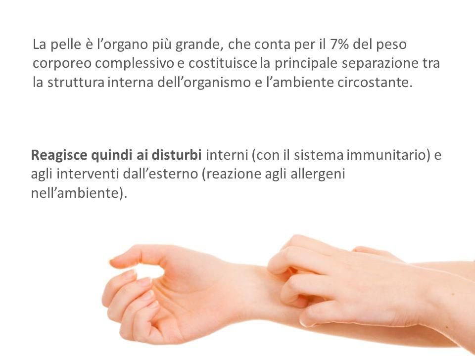 La pelle è l'organo più grande, che conta per il 7% del peso corporeo complessivo e costituisce la principale separazione tra la struttura interna del