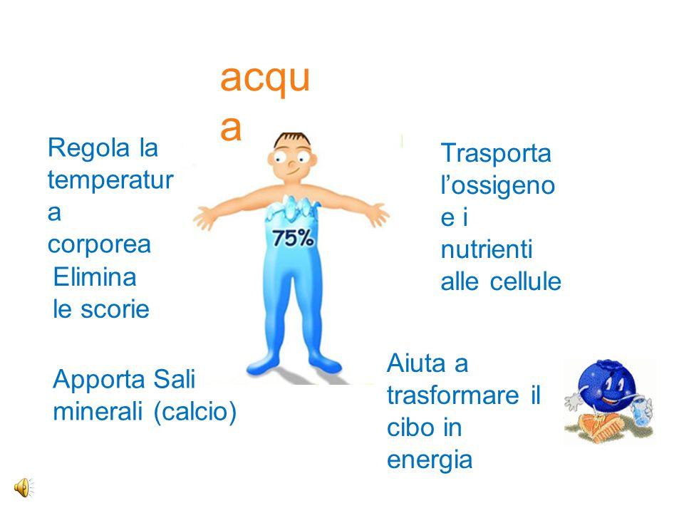 fibra alimentare modula l'assorbimento di alcuni nutrienti (zuccheri, grassi) svolge la funzione di regolatore intestinale