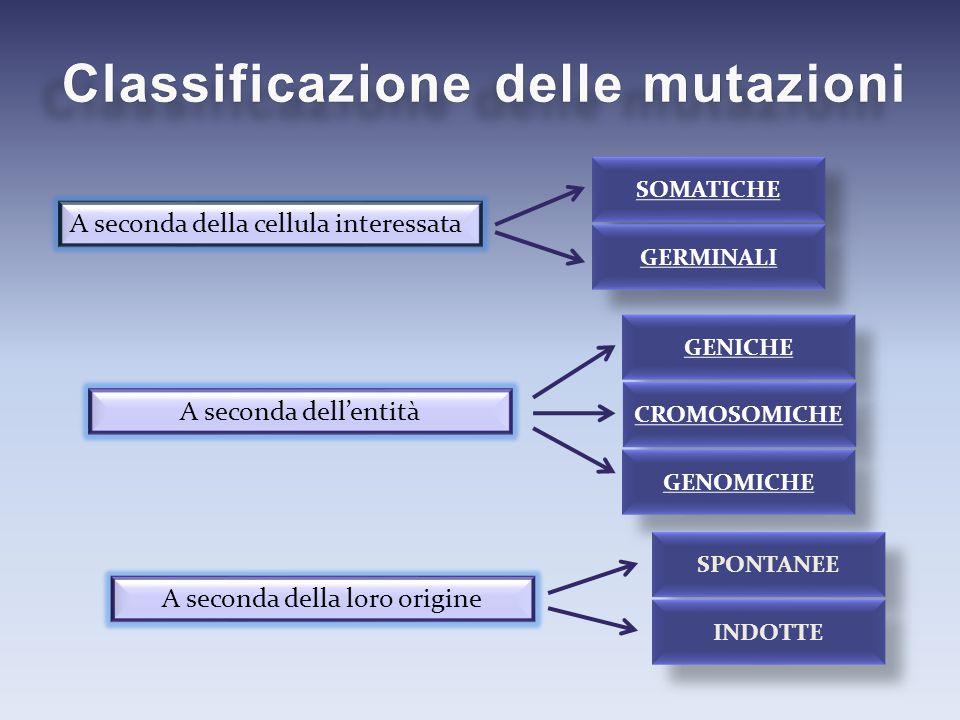 A seconda della cellula interessata A seconda dell'entità A seconda della loro origine SOMATICHE GERMINALI GENICHE CROMOSOMICHE GENOMICHE SPONTANEE IN