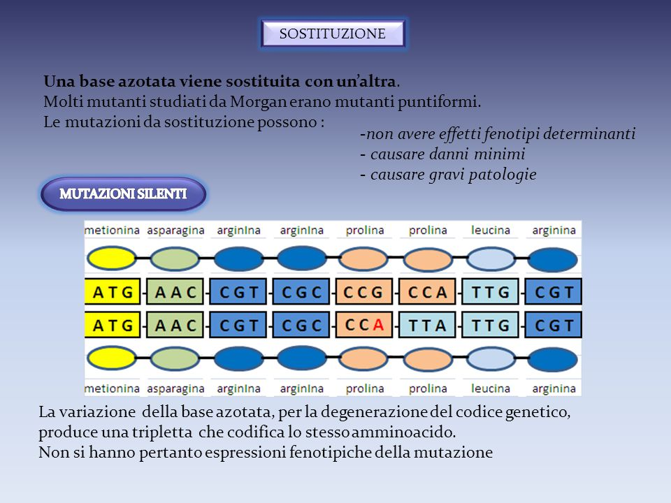 SOSTITUZIONE Una base azotata viene sostituita con un'altra. Molti mutanti studiati da Morgan erano mutanti puntiformi. Le mutazioni da sostituzione p