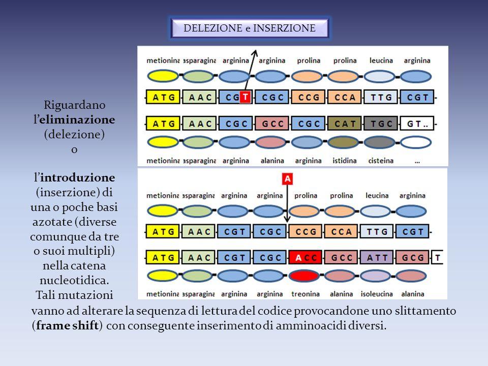DELEZIONE e INSERZIONE Riguardano l'eliminazione (delezione) o l'introduzione (inserzione) di una o poche basi azotate (diverse comunque da tre o suoi