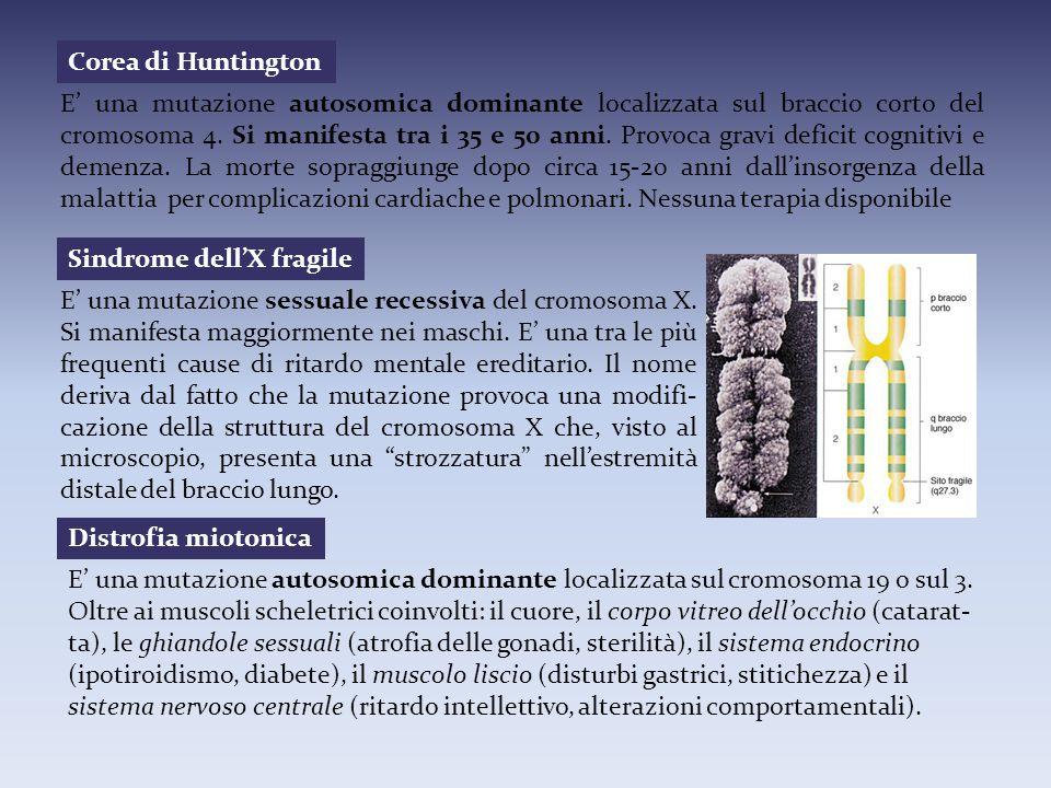 Corea di Huntington E' una mutazione autosomica dominante localizzata sul braccio corto del cromosoma 4. Si manifesta tra i 35 e 50 anni. Provoca grav