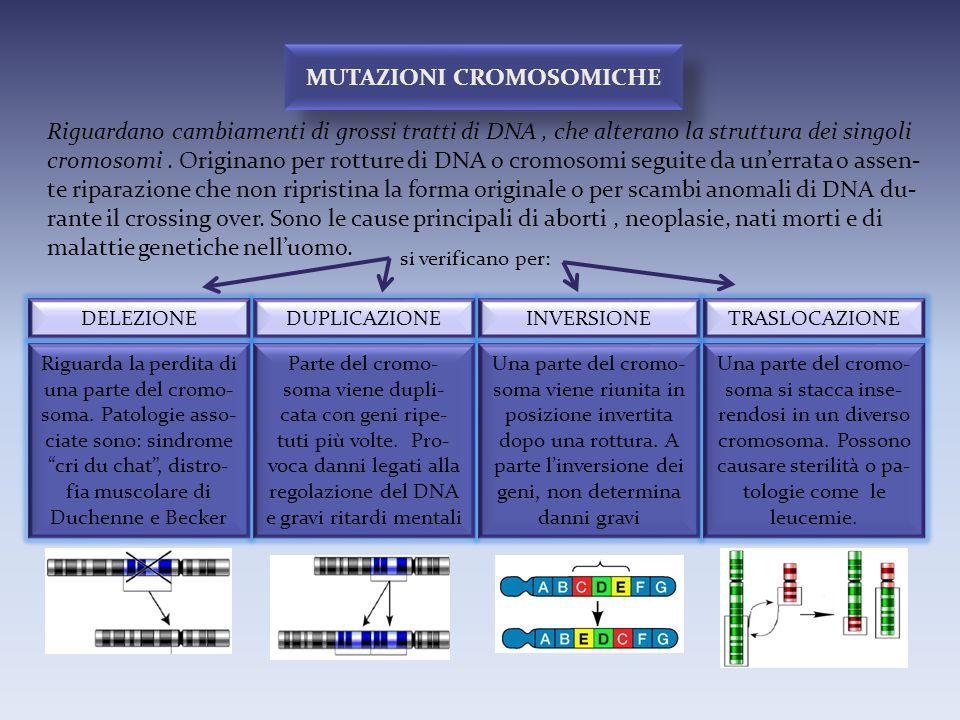 Riguardano cambiamenti di grossi tratti di DNA, che alterano la struttura dei singoli cromosomi. Originano per rotture di DNA o cromosomi seguite da u