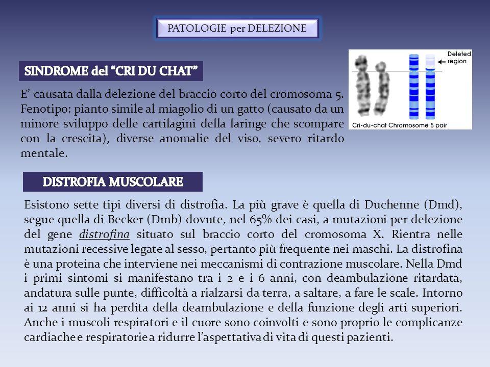 PATOLOGIE per DELEZIONE E' causata dalla delezione del braccio corto del cromosoma 5. Fenotipo: pianto simile al miagolio di un gatto (causato da un m