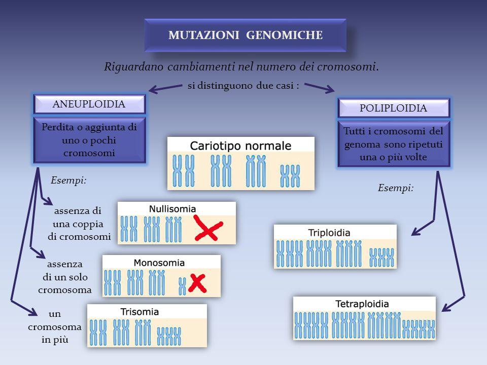 assenza di una coppia di cromosomi Riguardano cambiamenti nel numero dei cromosomi. MUTAZIONI GENOMICHE POLIPLOIDIA ANEUPLOIDIA si distinguono due cas