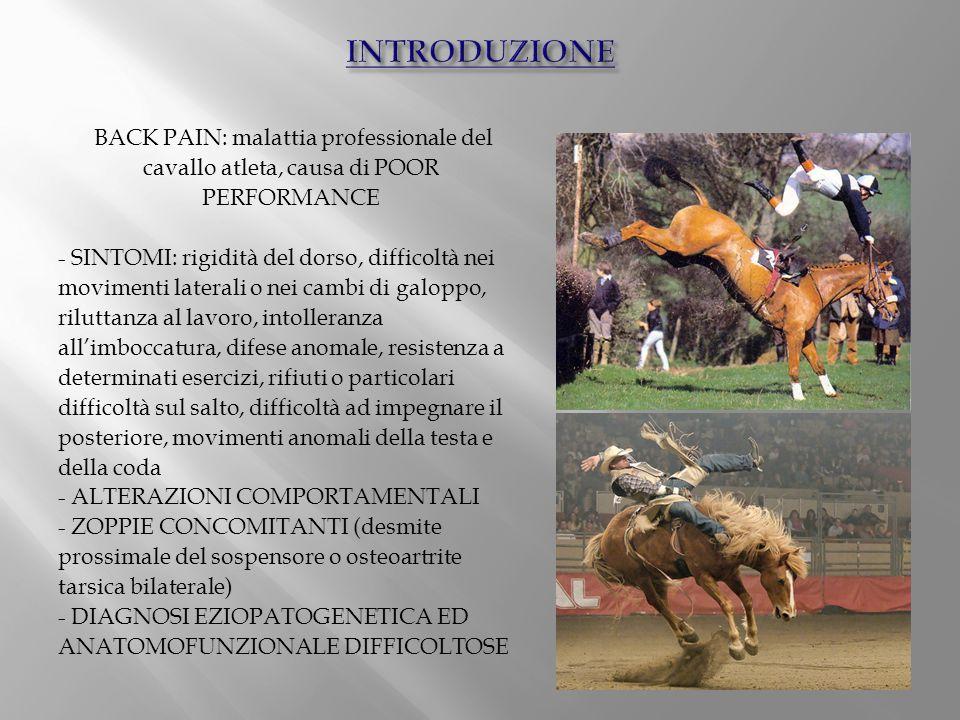 BACK PAIN: malattia professionale del cavallo atleta, causa di POOR PERFORMANCE - SINTOMI: rigidità del dorso, difficoltà nei movimenti laterali o nei
