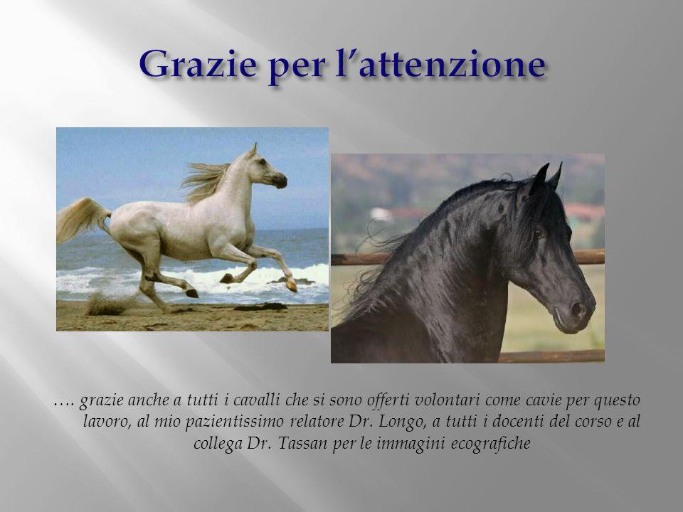 …. grazie anche a tutti i cavalli che si sono offerti volontari come cavie per questo lavoro, al mio pazientissimo relatore Dr. Longo, a tutti i docen