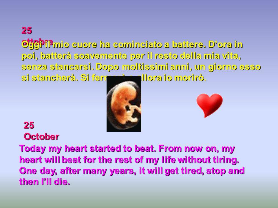 25 ottobre Oggi il mio cuore ha cominciato a battere. D'ora in poi, batterà soavemente per il resto della mia vita, senza stancarsi. Dopo moltissimi a