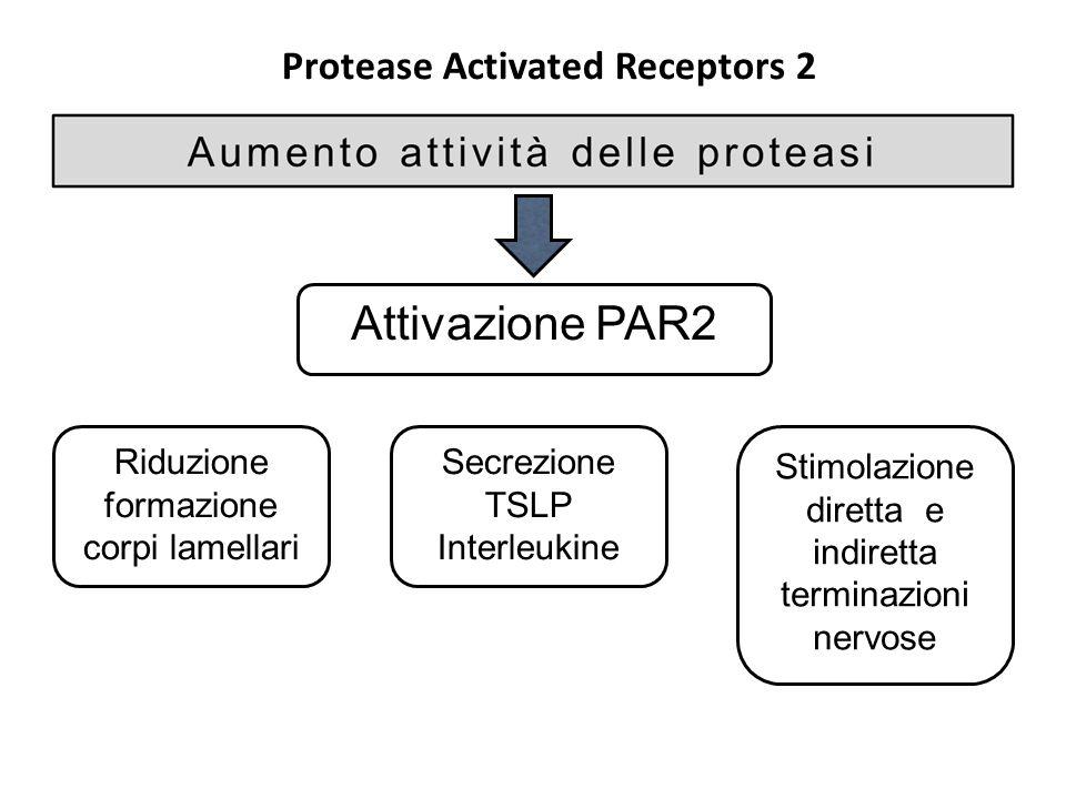 Protease Activated Receptors 2 Attivazione PAR2 Riduzione formazione corpi lamellari Secrezione TSLP Interleukine Stimolazione diretta e indiretta ter