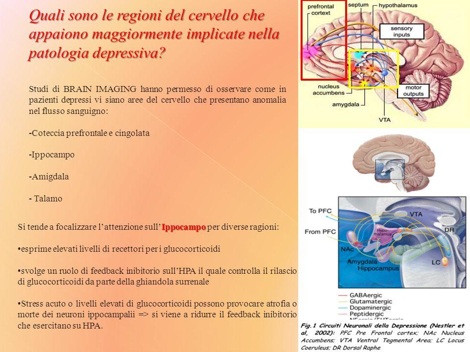 Ippocampo Si tende a focalizzare l'attenzione sull'Ippocampo per diverse ragioni: esprime elevati livelli di recettori per i glucocorticoidi svolge un ruolo di feedback inibitorio sull'HPA il quale controlla il rilascio di glucocorticoidi da parte della ghiandola surrenale Stress acuto o livelli elevati di glucocorticoidi possono provocare atrofia o morte dei neuroni ippocampalii => si viene a ridurre il feedback inibitorio che esercitano su HPA.
