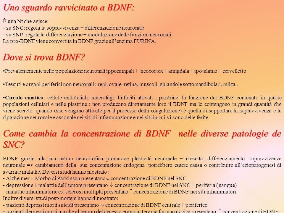 Uno sguardo ravvicinato a BDNF: È una Nt che agisce: - su SNC: regola la sopravvivenza + differenziazione neuronale - su SNP: regola la differenziazione + modulazione delle funzioni neuronali La pro-BDNF viene convertita in BDNF grazie all'enzima FURINA.
