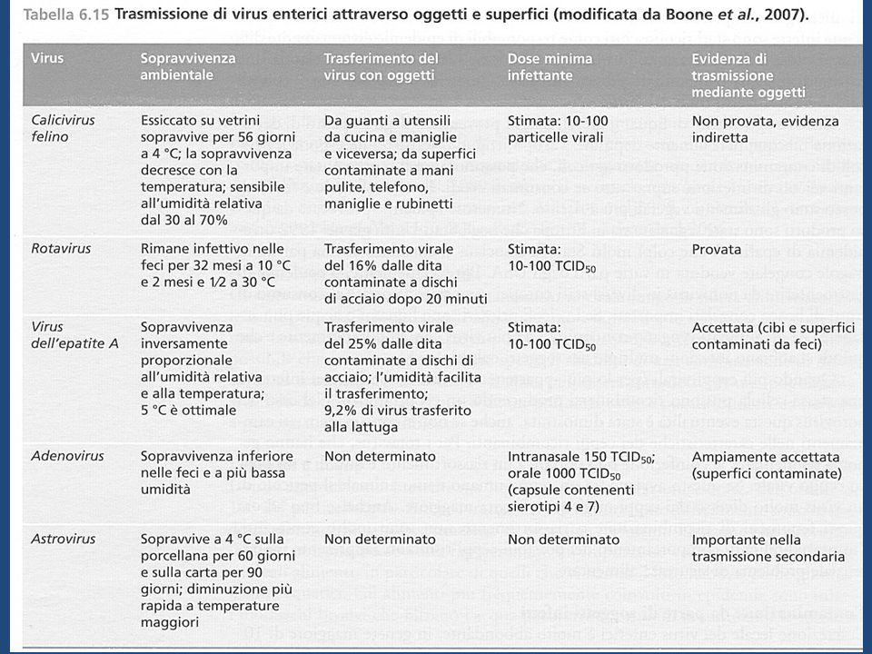 PREVENZIONE EPATITE A Igiene (e.g., lavaggio delle mani) Sanificazione (e.g., acque) Vaccinazione (pre-esposizione) Immunoglobuline (pre- e post- esposizione)