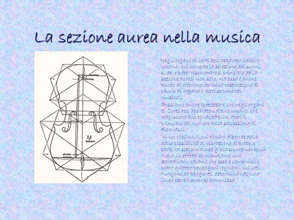La sezione aurea nella musica Negli organi di corti dell'apparato uditivo umano, cui compete la selezione dei suoni, si deve poter riscontrare il prin