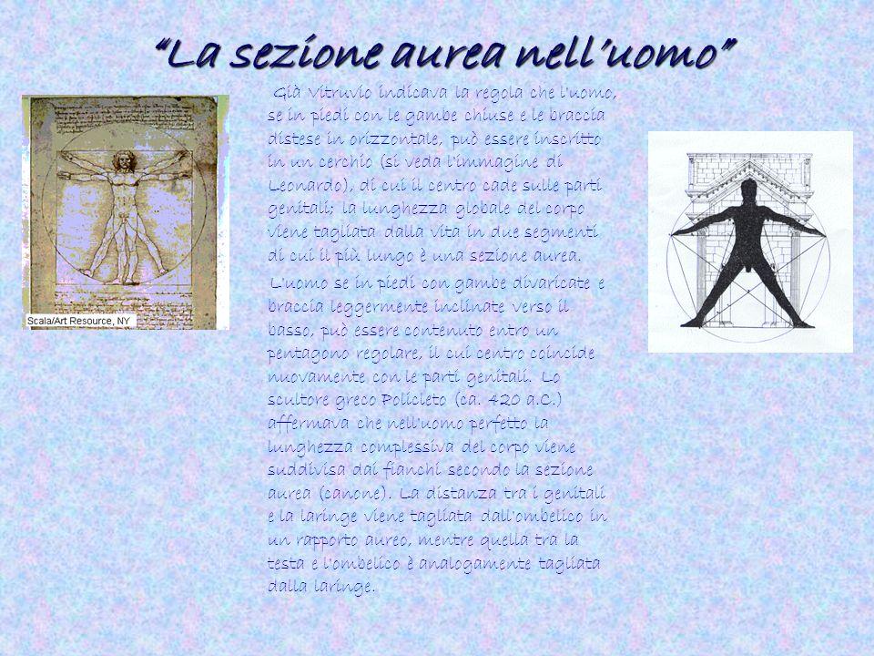 """""""La sezione aurea nell'uomo"""" Già Vitruvio indicava la regola che l'uomo, se in piedi con le gambe chiuse e le braccia distese in orizzontale, può esse"""