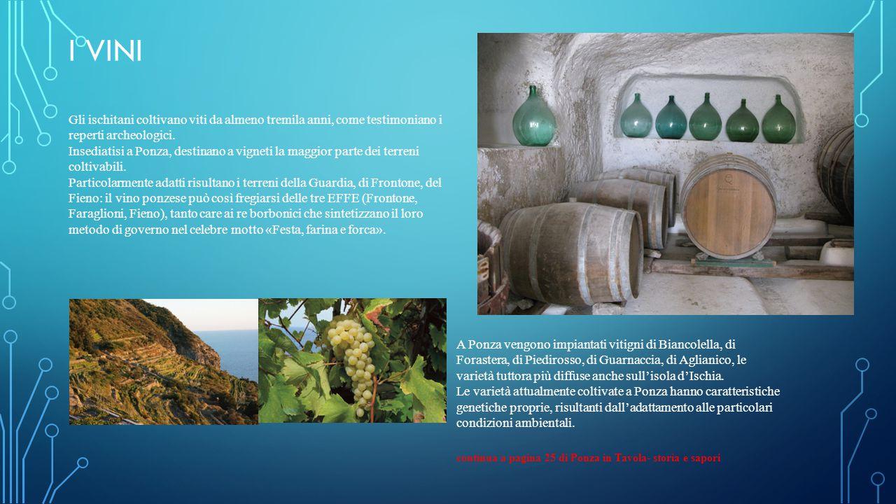 I VINI Gli ischitani coltivano viti da almeno tremila anni, come testimoniano i reperti archeologici.