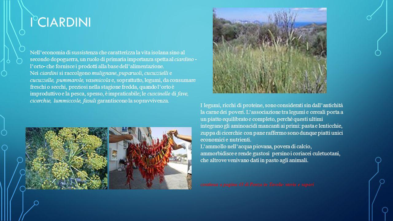 I CIARDINI Nell'economia di sussistenza che caratterizza la vita isolana sino al secondo dopoguerra, un ruolo di primaria importanza spetta al ciardino - l'orto- che fornisce i prodotti alla base dell'alimentazione.