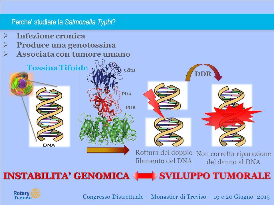 TITLE   7 Scopo D-2060 Congresso Distrettuale – Monastier di Treviso – 19 e 20 Giugno 2015 Lo scopo è caratterizzare le proprietà carcinogeniche delle infezioni croniche indotte da batteri in grado di produrre genotossine mediante modelli in vivo.