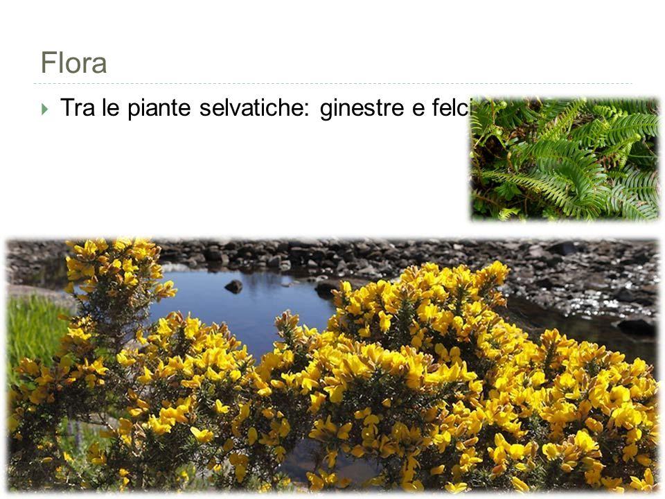 Flora  Tra le piante selvatiche: ginestre e felci