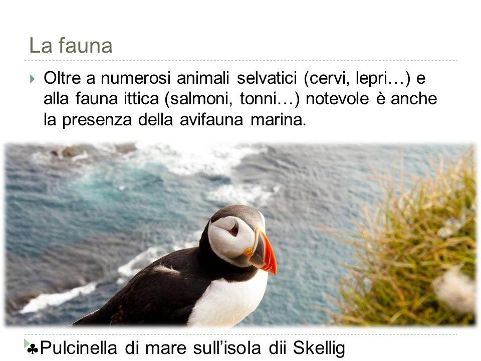 La fauna  Oltre a numerosi animali selvatici (cervi, lepri…) e alla fauna ittica (salmoni, tonni…) notevole è anche la presenza della avifauna marina.