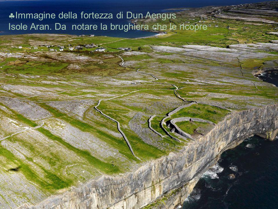  Immagine della fortezza di Dun Aengus Isole Aran. Da notare la brughiera che le ricopre
