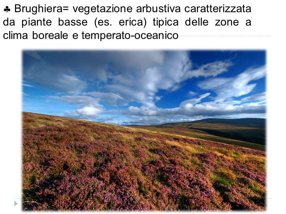  Brughiera= vegetazione arbustiva caratterizzata da piante basse (es. erica) tipica delle zone a clima boreale e temperato-oceanico