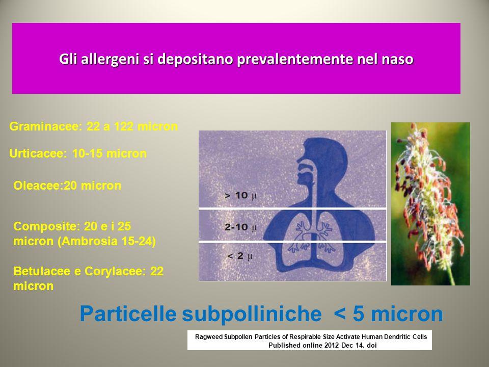 Gli allergeni si depositano prevalentemente nel naso Graminacee: 22 a 122 micron Urticacee: 10-15 micron Oleacee:20 micron Composite: 20 e i 25 micron